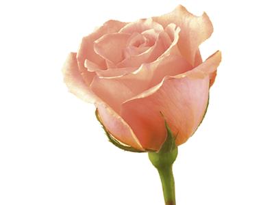 D 233 Couvrez Le Langage Et La Signification Des Fleurs