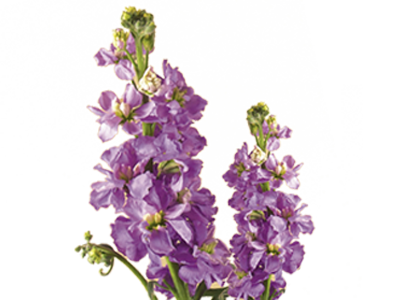 discover the language  meanings of flowers  teleflora, Natural flower