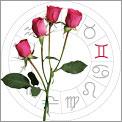 Gemini is Roses