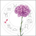 Sagittarius is Carnations