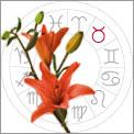 Taurus is Lilies