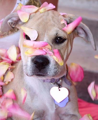 Dog and rose petals