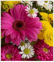 Seasonal Summer Flowers
