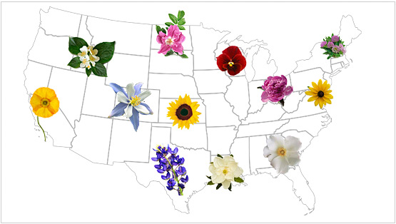 Find official state flower for usa teleflora state flowers mightylinksfo