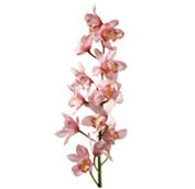 What wedding flowers are in season in spring teleflora cybidium orchid junglespirit Images