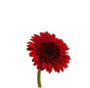 What Wedding Flowers Are In Season In Winter Teleflora